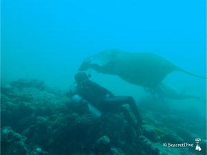raie-manta-jc-rapprochement-maldives-seacretdive