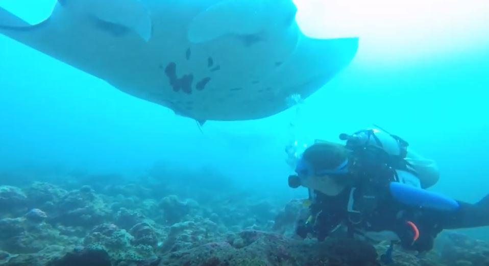 sophie-raie-manta-maldives-seacretdive