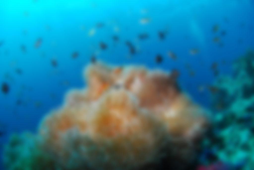photo-plongee-floue