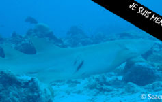 requin-extinction-seacretdive
