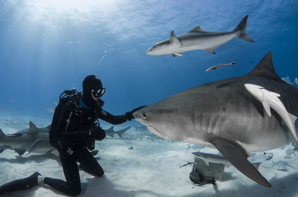 Interaction entre l'Homme et le requin. Source : Shark Education