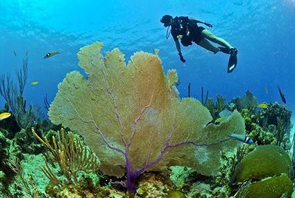 La beauté des paysages sous-marins viennent renforcer la sensation de bien-être sous l'eau